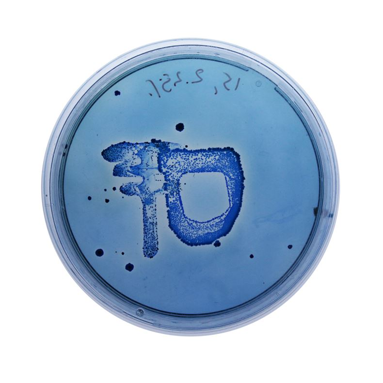 3050567-slide-s-9-a-living-typeface-grown-from-bacteria