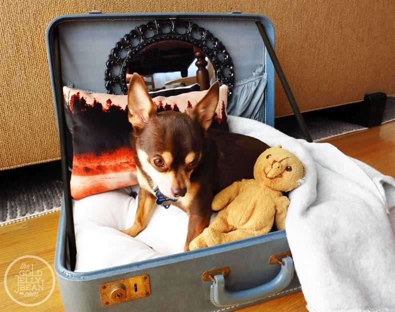 DIY-Vintage-Suitcase-Dog-Bed