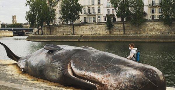 לווייתן מת הונח במחאה על גדות הסיין בפריס