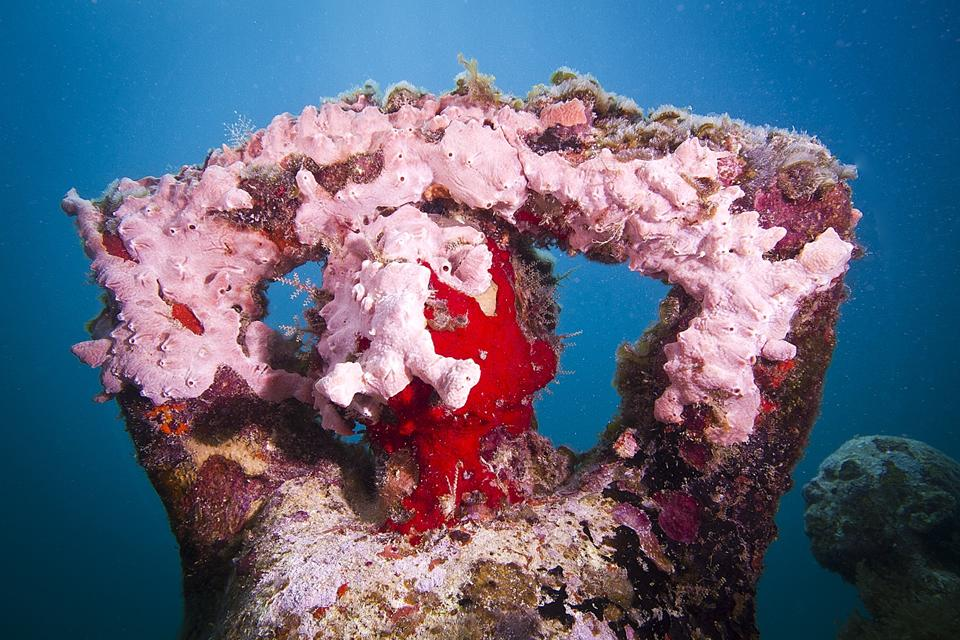Silent-Evolution_Mexico_coral_pink_03_Jason-deCaires-Taylor_Sculpture