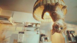 החתלתול שביטל את כח המשיכה