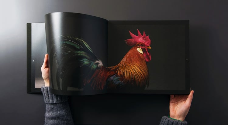 chicken-portrait-book-monti-tranchellini-6