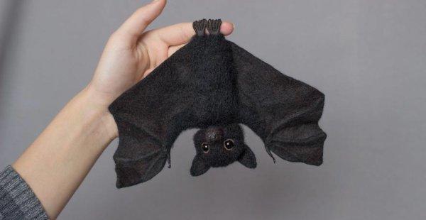 רוצים עטלף קטן מצמר? תצטרכו לחכות