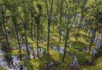 נוף יפני מדהים: גן המים – Junya Ishigami