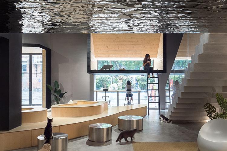 בית קפה לחתולים בגואנגג'ואו, סין
