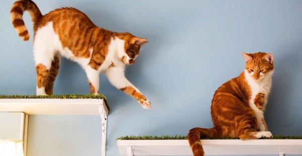 """שיגעון """"בתי הקפה לחתולים"""" סוחף את העולם"""