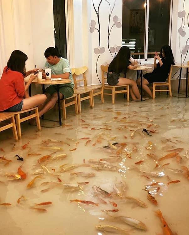 בית קפה בו דגים שוחים לכם בין הרגליים