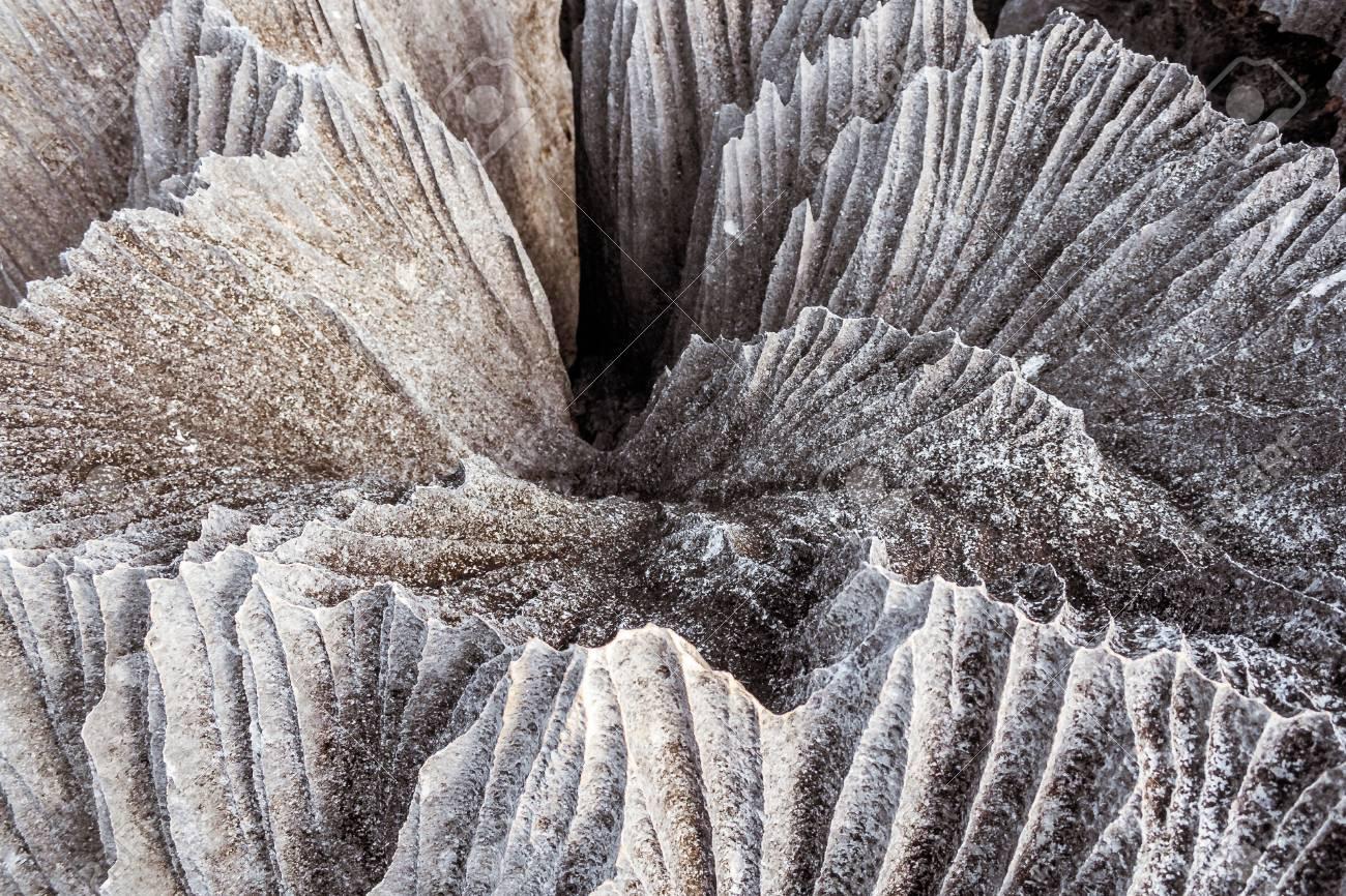 יער הסלעים של מדגסקר