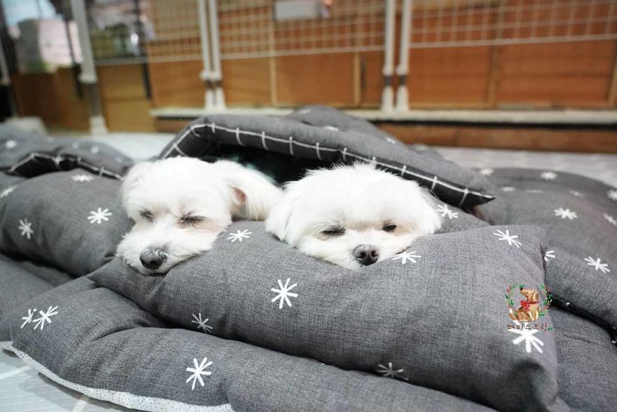 תמונות של כלבלבים הנמים במיטותיהם, במעון לבעלי חיים, הפכו לויראליות
