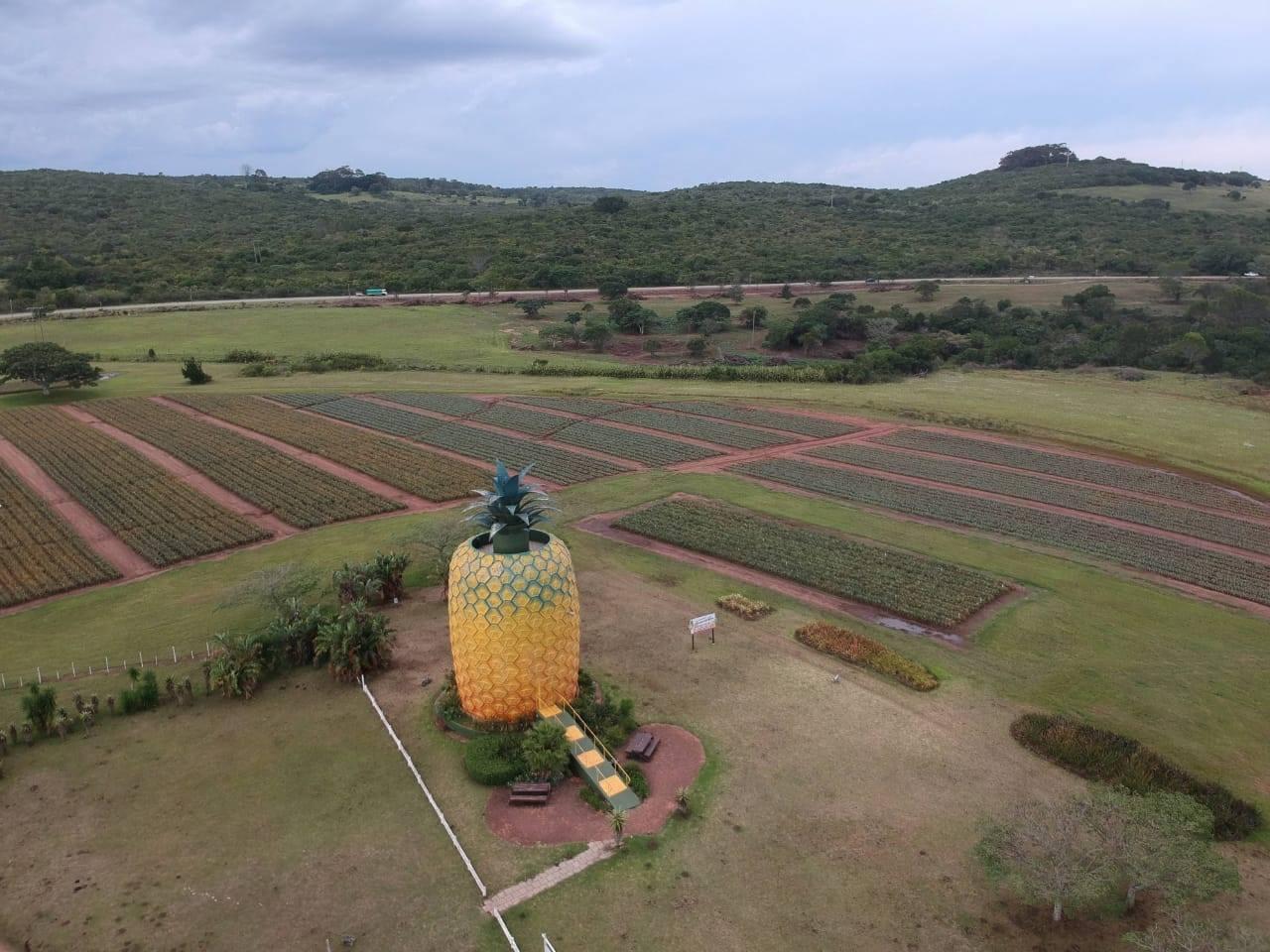 האננס הגדול (Bathurst, דרום אפריקה)