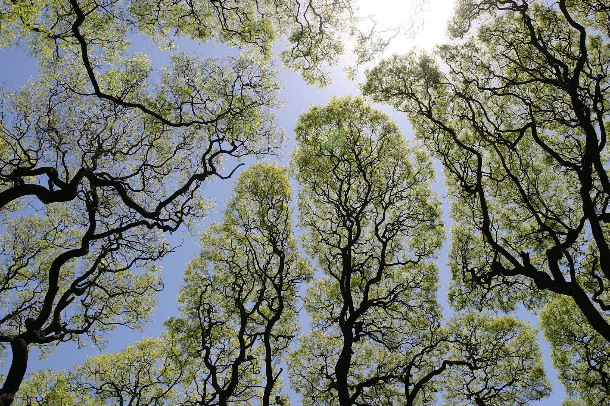 עצים שומרים על ריחוק חברתי, למנוע הדבקה