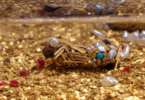 אמן צרפתי משתף פעולה עם חרקים, ביצירת תכשיטי יוקרה