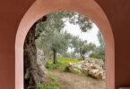 בתי עץ הזית בפלמה דה מיורקה
