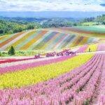 פארקים של פרחים ביפן