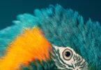 עופות / Tim Flach