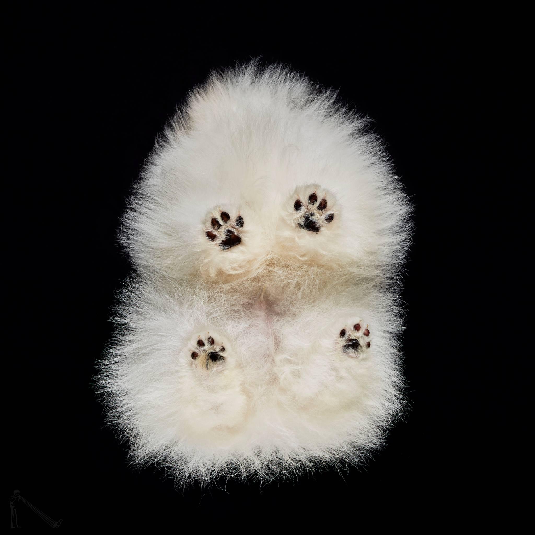 להיותUnder-dog: צילומי בעלי חיים מלמטה