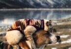 החברות המופלאה בין כלב וחתול ומסעותיהם בעולם