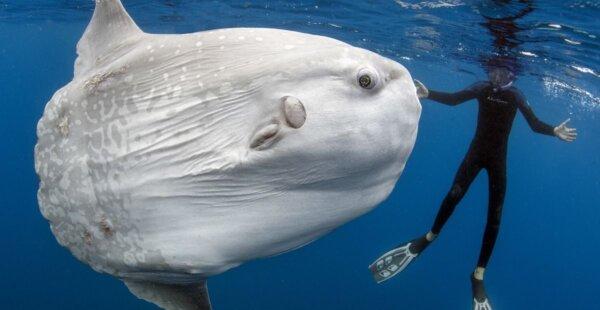 חוקרים גילו שענק ימי – נוצר מדגיגים בגודל מילימטר