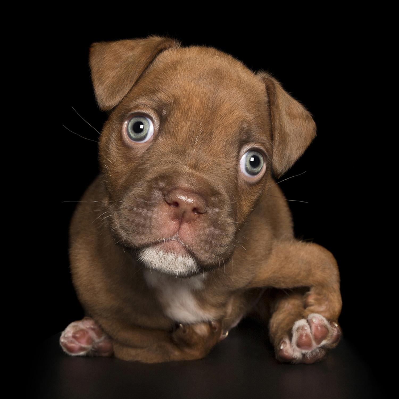 השלימות שבבעלי חיים לא מושלמים