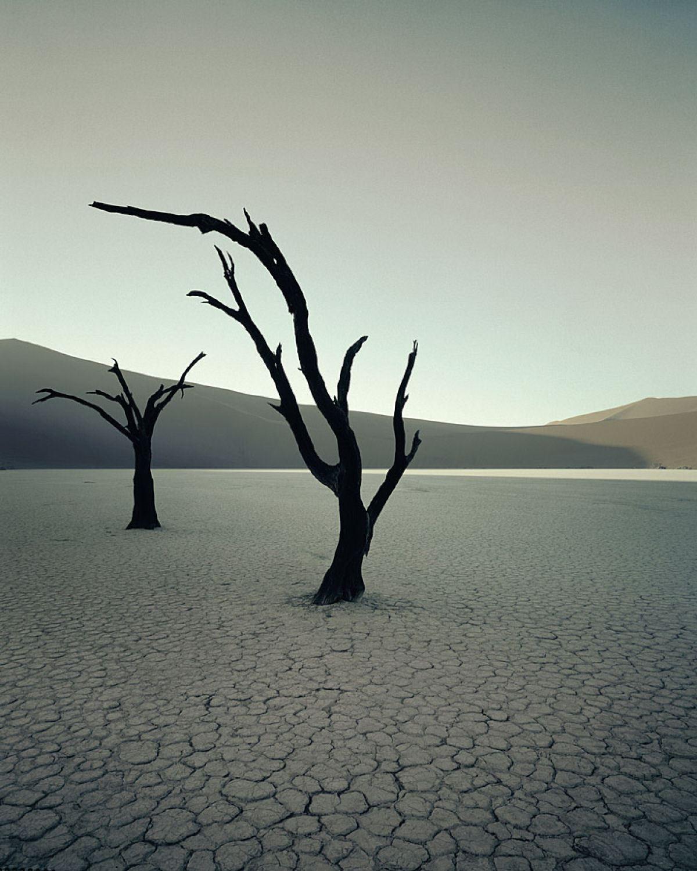 העצים המופלאים מרחבי העולם