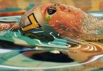 פעמון הזכוכית של שחיינים אולימפיים / Ian MacNicol