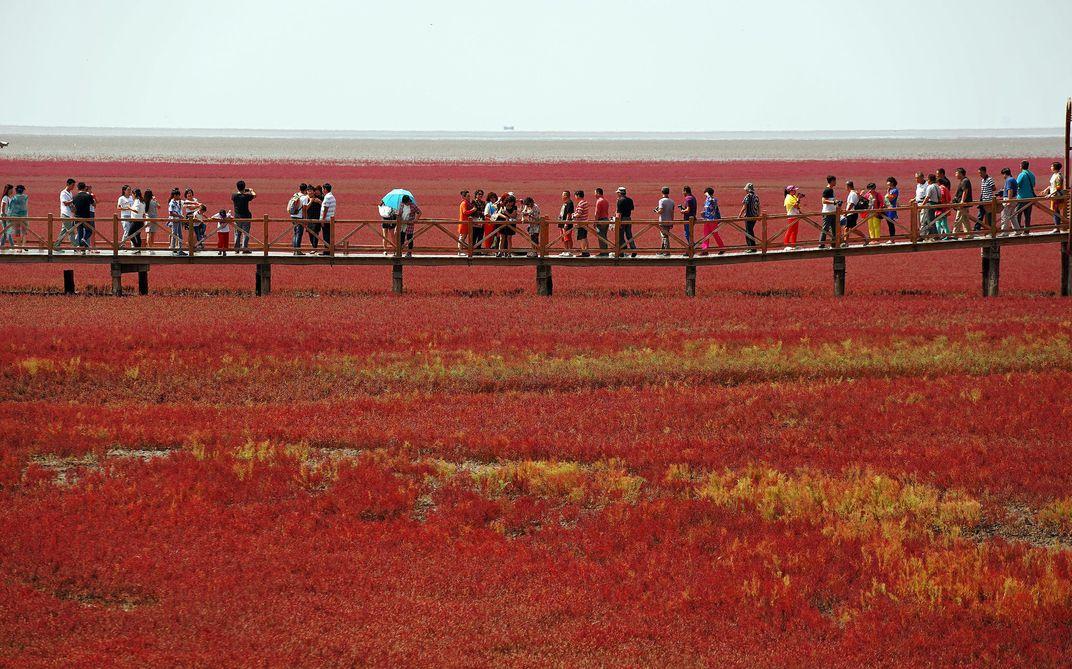 טיול בחוף האדום והמדהים של פנג'ין בסין