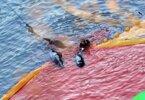 דגל אדום – די לטבח ביונקים ובבעלי חיים