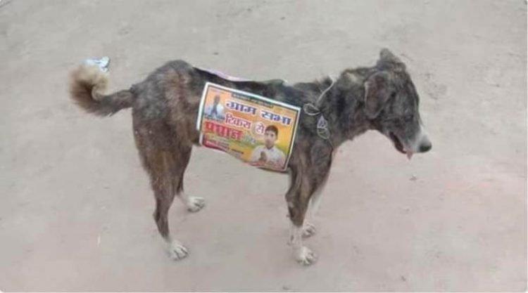 מועמדים פוליטיים בהודו משתמשים בכלבים משוטטים כשלטי חוצות מהלכים