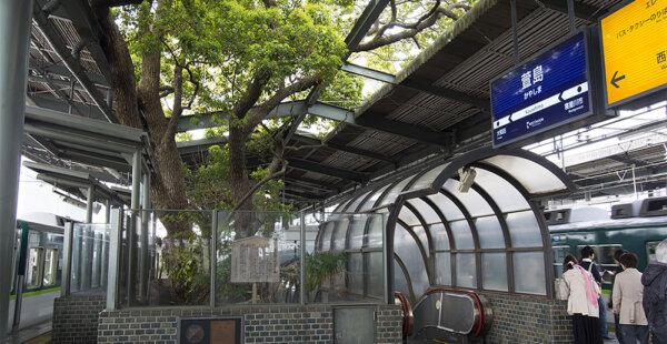 תחנת הרכבת היפנית נבנתה סביב עץ בן 700 שנה