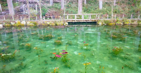 בריכת חבצלות המים של קלוד מונה, נמצאה ביפן