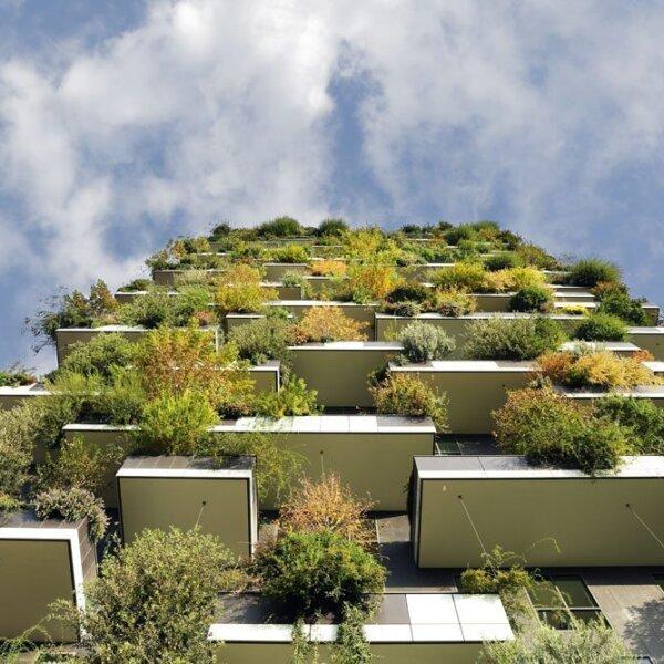 סין השקיעה 440 מיליארד בערים ירוקות – שנכשלו כי לא היה להן גנן