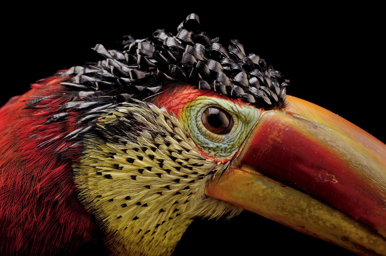 תיעוד חיות נכחדות: Joel Sartore