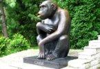 איך הפך קוף שימפנזה, לסמל השאיפה לחופש, של עם תחת שליטה זרה