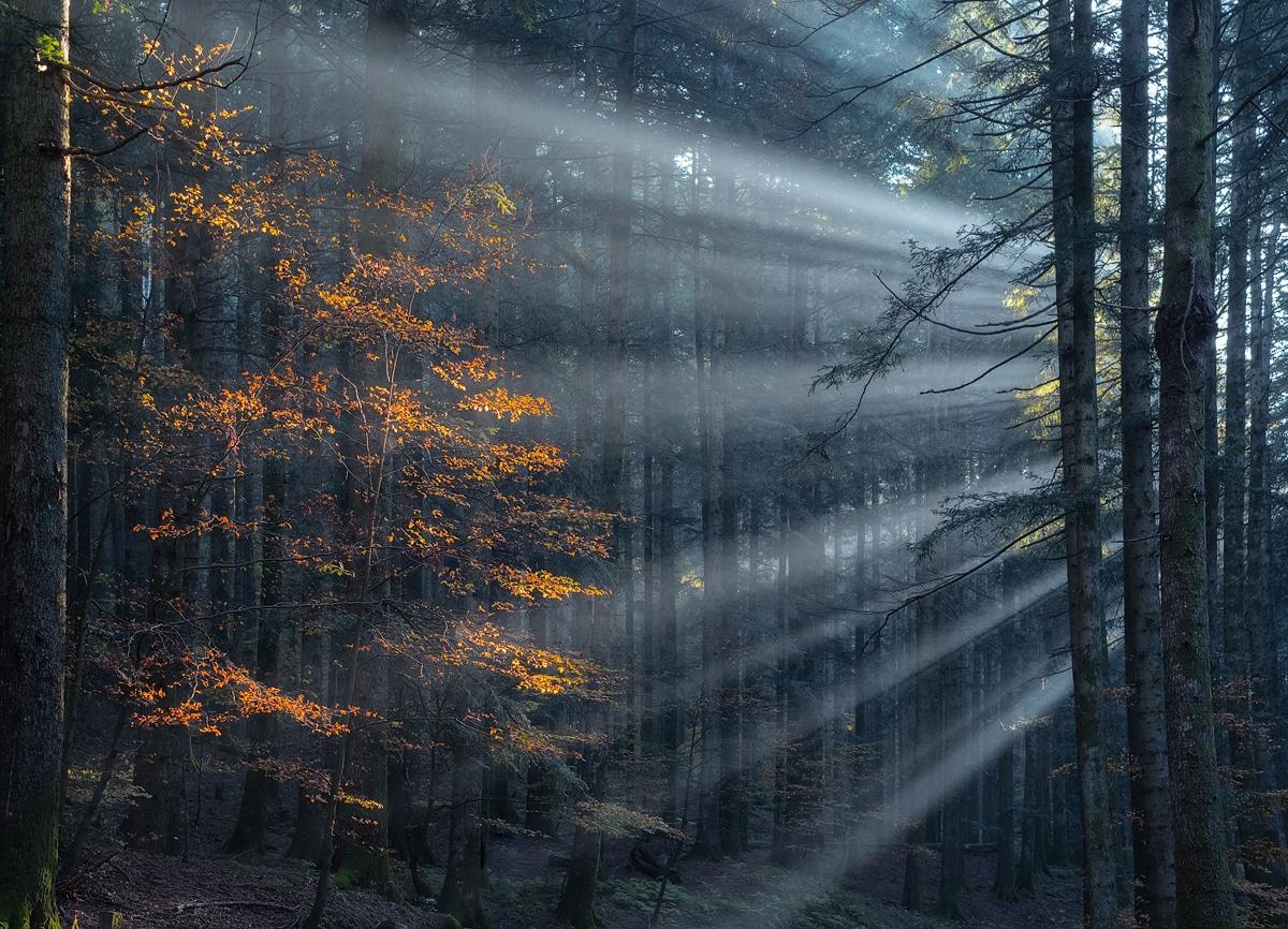 היופי של עצים באמצע יער מאת Manuelo Bececco