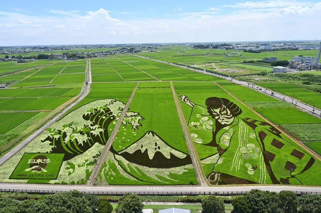 פסטיבלי אמנות שדות האורז ביפן 2021